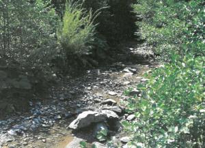 Potok u sušnom razdoblju
